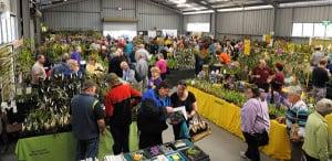 st ives orchid fair